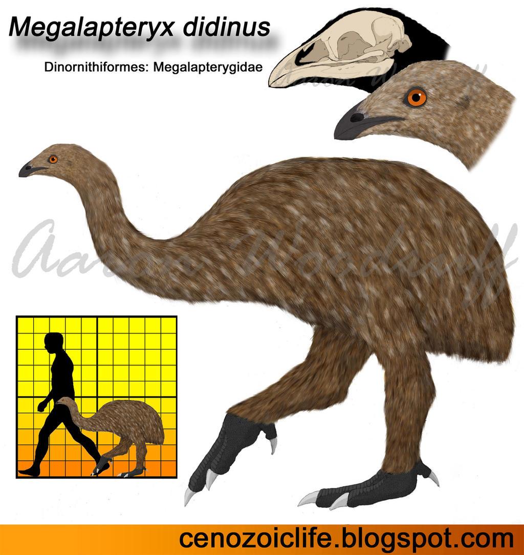 Megalapteryx didinus by CenozoicKing
