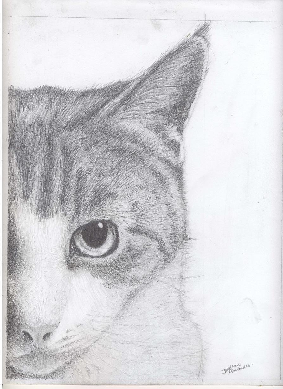 Cat Stare by Buyart