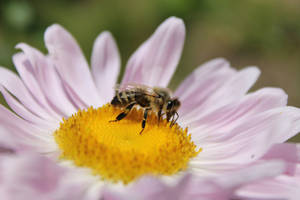 Bee by Miaissleeping
