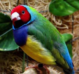 New Harmony Bird by MacroMagnificent