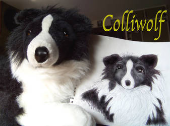 Sadie, My Stuffed Collie by Colliwolf