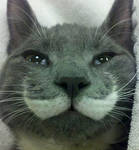 Mustache Cat XD