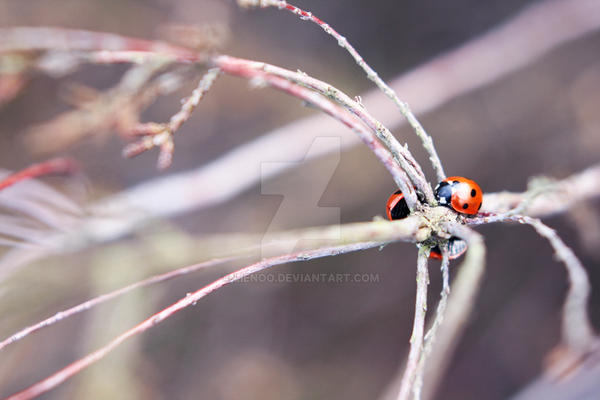 Ladybug Love by Lienoo