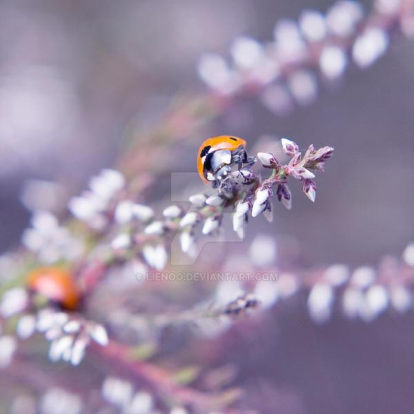 Purple by Lienoo
