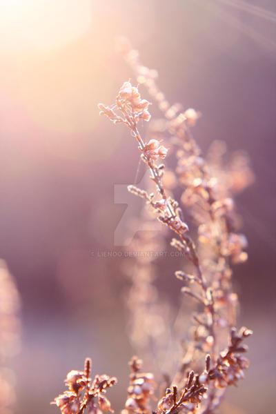 Sunshine by Lienoo