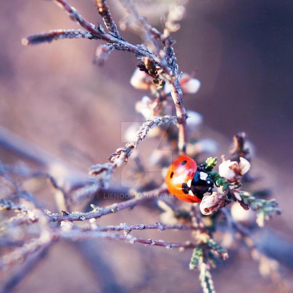 Ladybug 01 by Lienoo