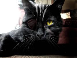 Xigbar Cat by XxPatrickStarRULZxX