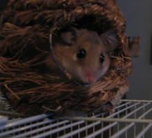 Mouse Hut