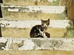 chaton sur les escaliers