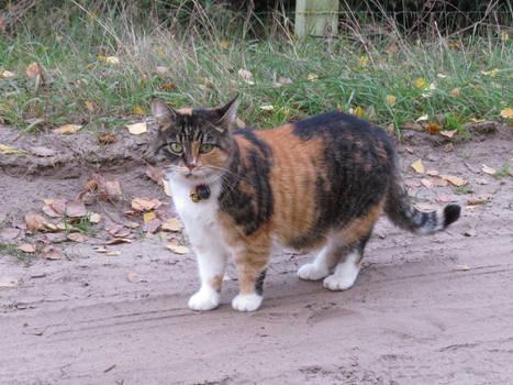 Kaczuchowa kotka 2