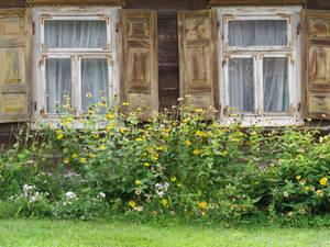 dwa okienka i kwiatki