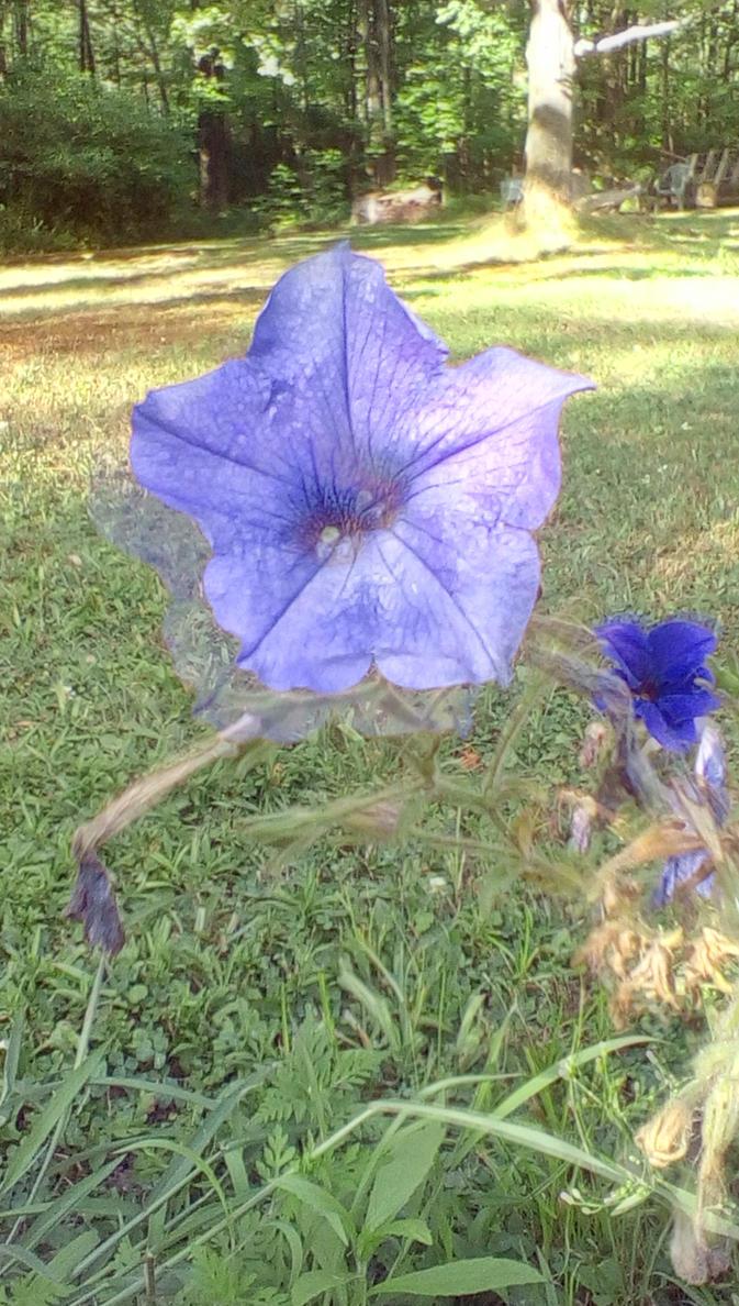 Flower by ValleyHummingbird