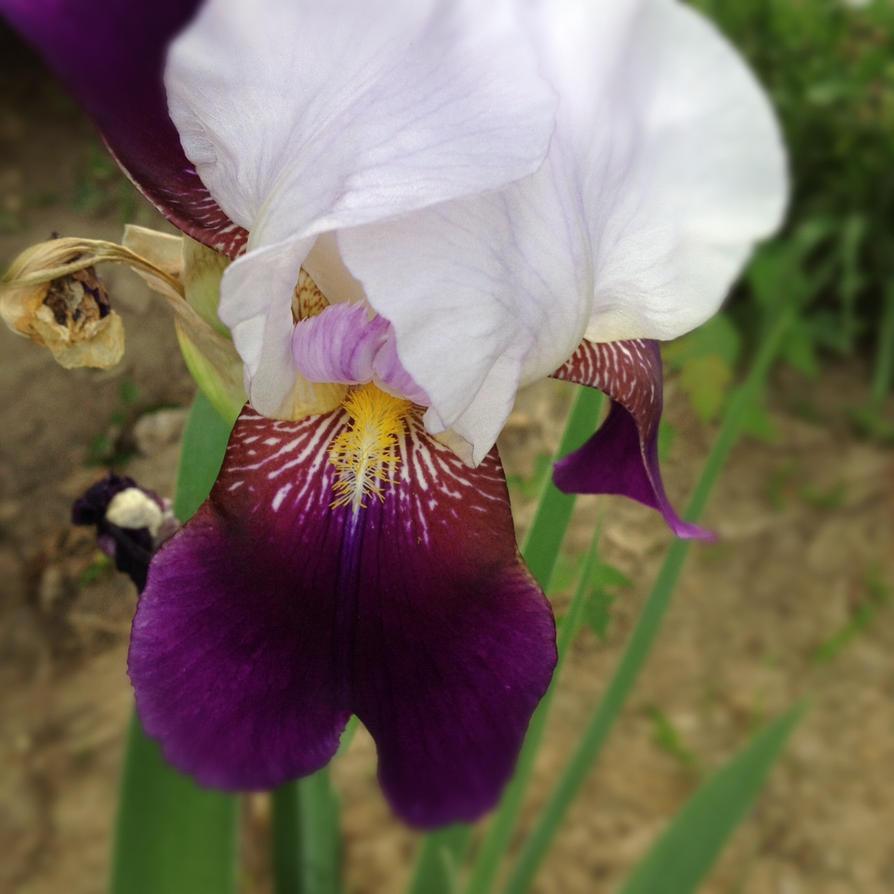 Purple Flower by to-kill-a-mockingjay