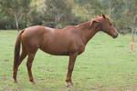 HorseStock58