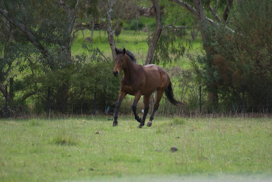 HorseStock71 by BlueBird-Stock
