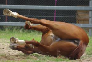 Horse_Stock003 by BlueBird-Stock
