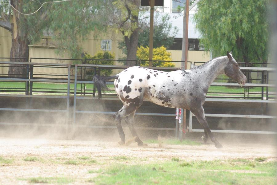 Horse_Stock0052 by BlueBird-Stock