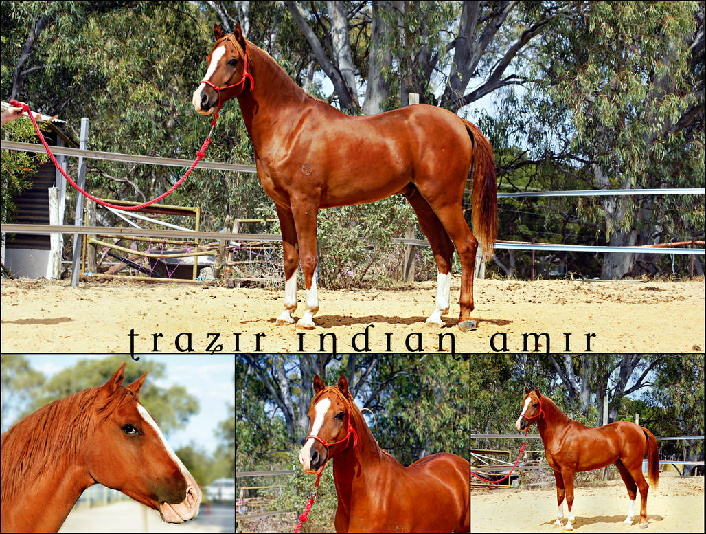 Trazir Indian Amir by BlueBird-Stock