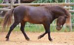 Spudstock