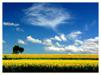 Summer Fields II by rahimyts