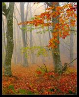 Autumn Forest by rahimyts