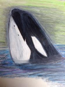orcas4faith's Profile Picture