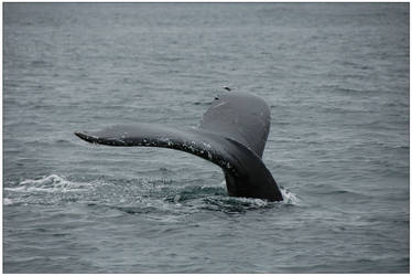 Whale tail by rotyoung