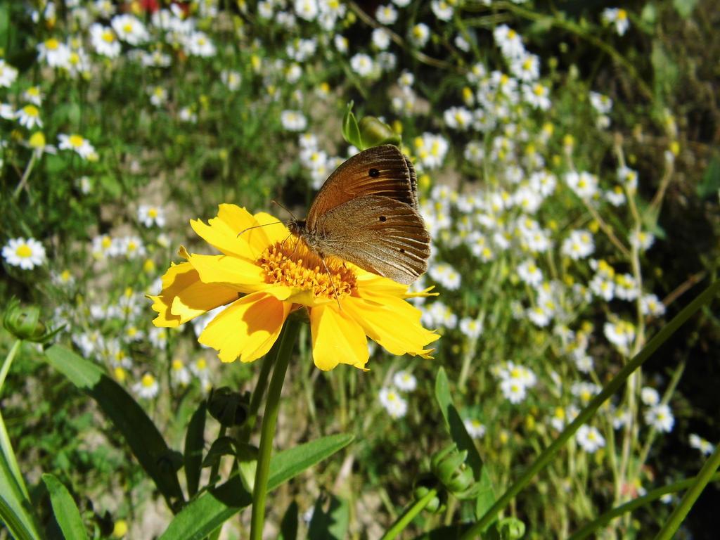 Beautiful Butterfly by szundisziszi