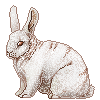 Bunny by CordisaWire