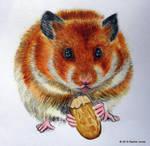 Samantha the Hamster