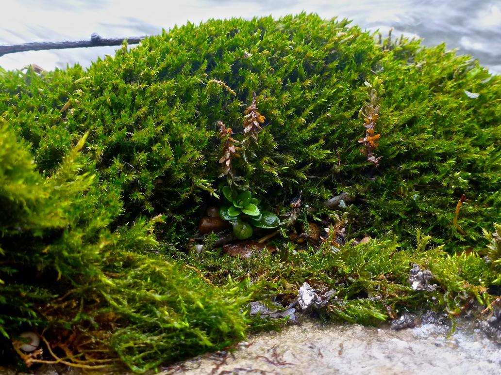 Moss Island by Fishhunter2014