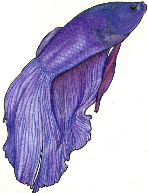 Purple betta by midnighttango27 on deviantart for Purple betta fish