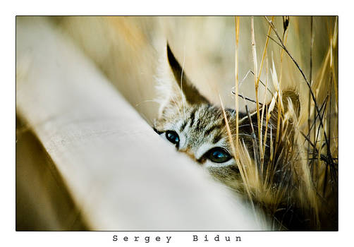 Peeking Over Into the Wild...