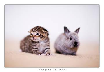 I'm a TIGER... by sergey1984