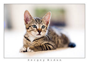 I'm a CAT... by sergey1984