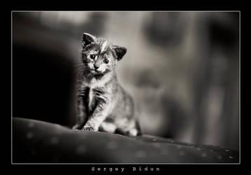 I'm a BiG CAT....