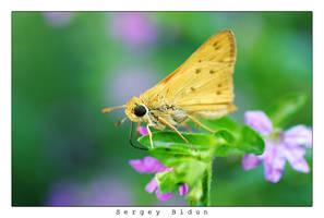 Butterfly. by sergey1984