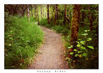 Forest Path.