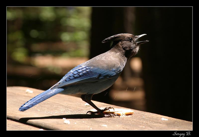 Blue Bird by sergey1984