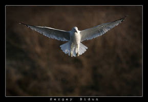 Seagle in Fly... by sergey1984