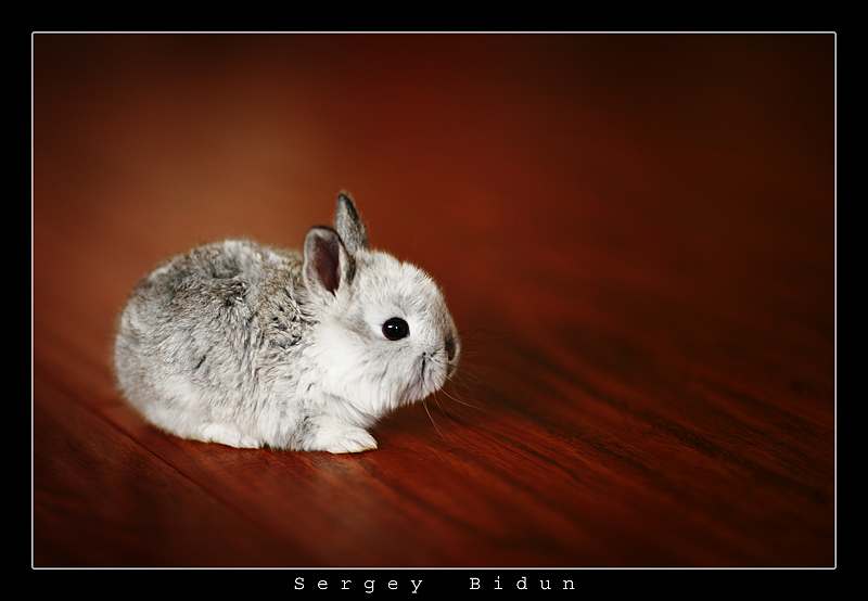 Little Bunny by sergey1984