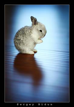 ...and carrots please... AMEN.