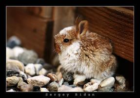 Little Bunny. by sergey1984