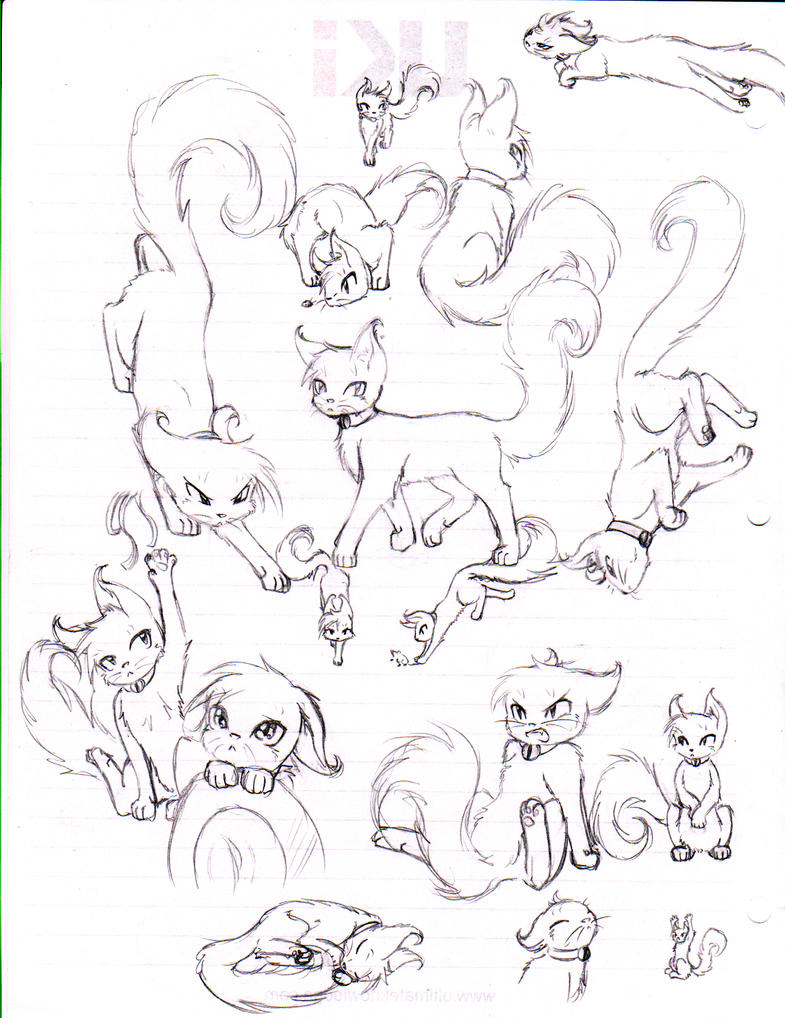 Cat Anatomy For Artists Image collections - human body anatomy