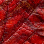 autumn by centralasian