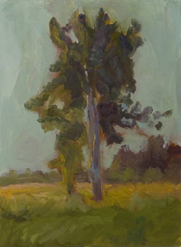 Etude with a linden tree