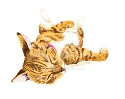 Hana - rolling cat