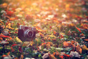 Agfa Optima 1a by Squirrelondope