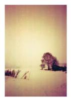 Winter Wonderland by Squirrelondope
