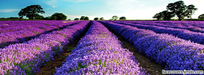 Lavender Fields  Facebook Cover By RockIT RH On DeviantArt